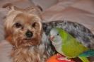 Pancho i Keko