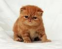 Garfield de pequeñin!