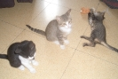 Los tres gatitos, Star, Moon y Sunny