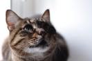 Nico, el gato de Shrek